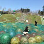 富士山 樹空の森で遊ぼう★キャンプついでのこども遊び場情報